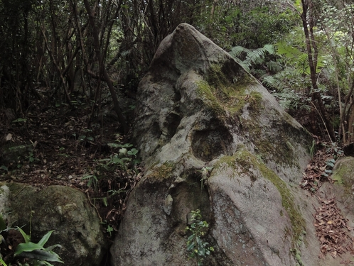 221030 白嶽森林公園20