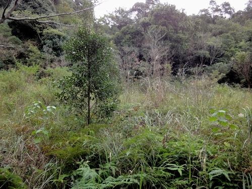 221030 白嶽森林公園40