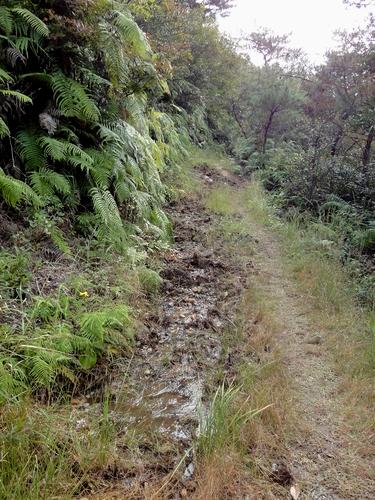 221030 白嶽森林公園36