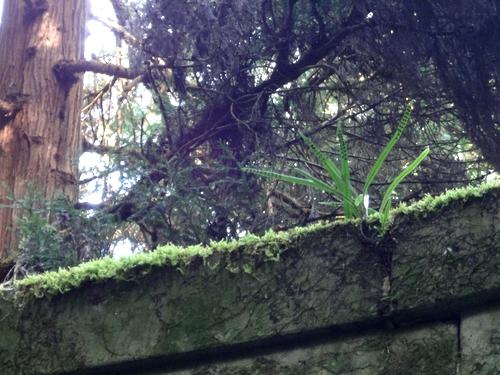 221106 上色見熊野座神社11