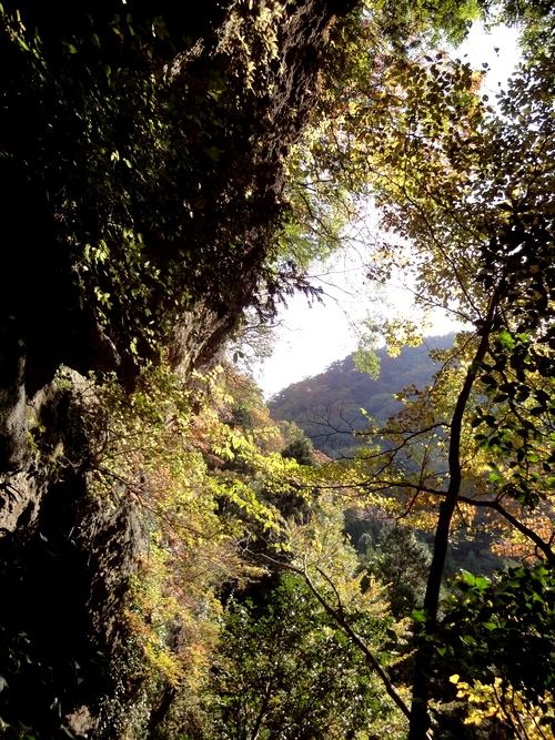 221106 上色見熊野座神社25