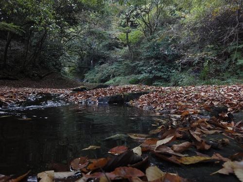 221106 白水の滝8