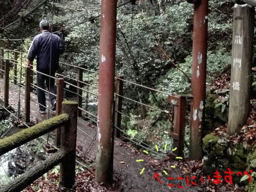 231106 梅の木轟7