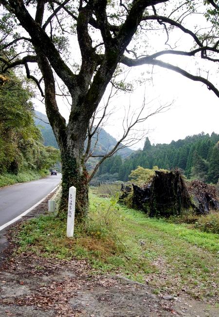 231120 トロッコ林道1