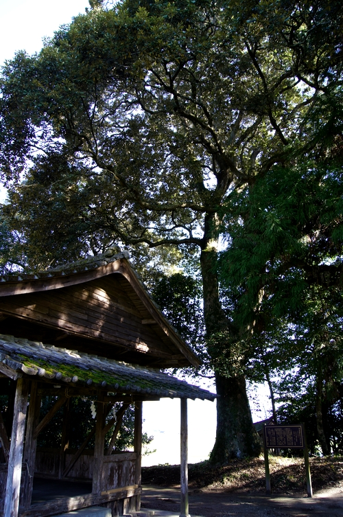 231204 木本神宮1
