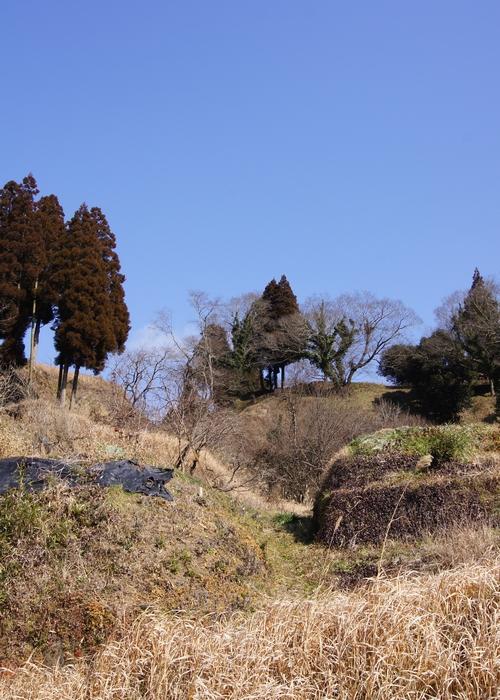 240129 田中城跡16