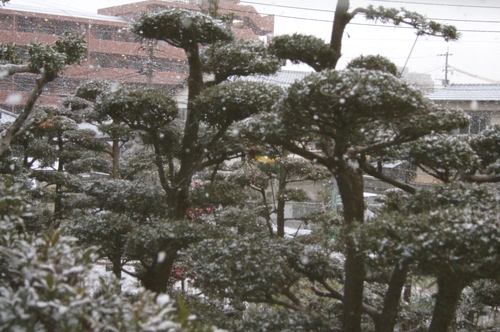 240202 雪