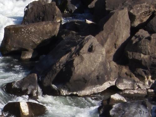 240204 曽木の滝14