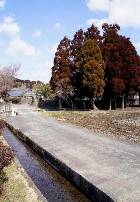 240211 杉伊川の湧水10