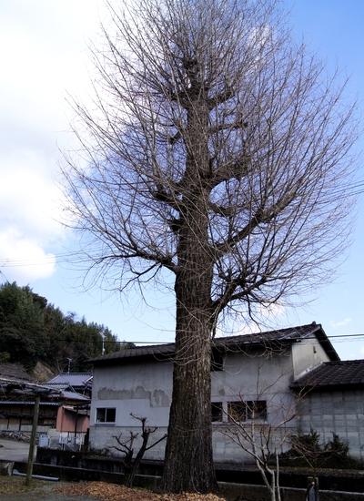 240211 菅原神社6