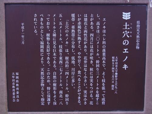 240303 土穴のエノキ5