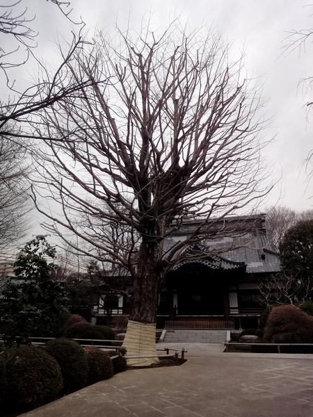 240305 高円寺05