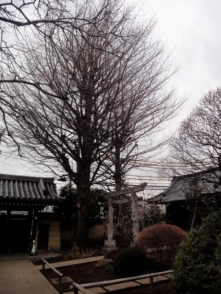 240305 高円寺09