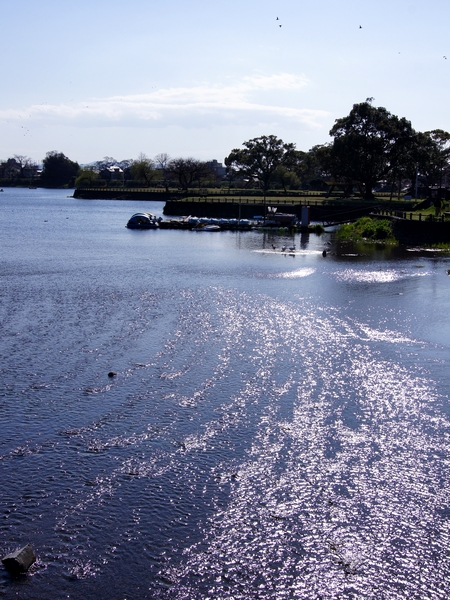 240325 江津湖散歩17
