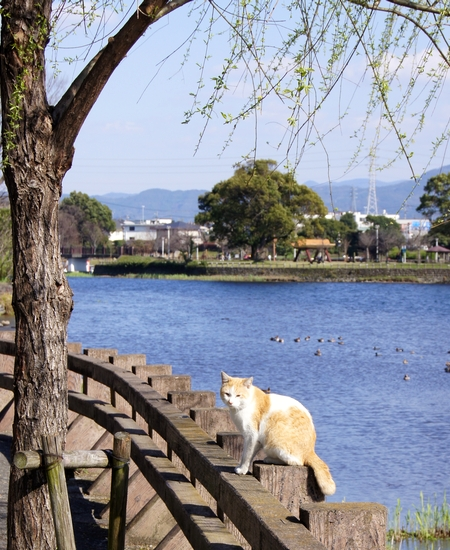 240325 江津湖散歩22
