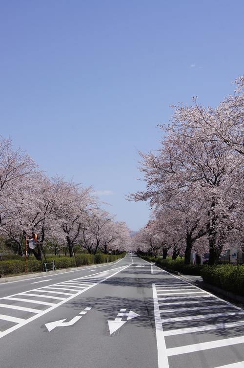 240331 おおづ桜まつり1