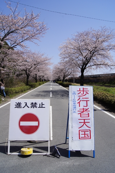 240331 おおづ桜まつり2