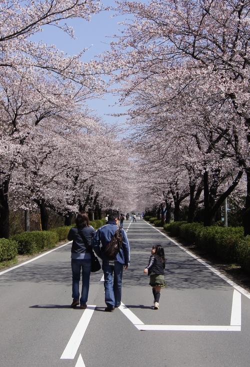 240331 おおづ桜まつり11
