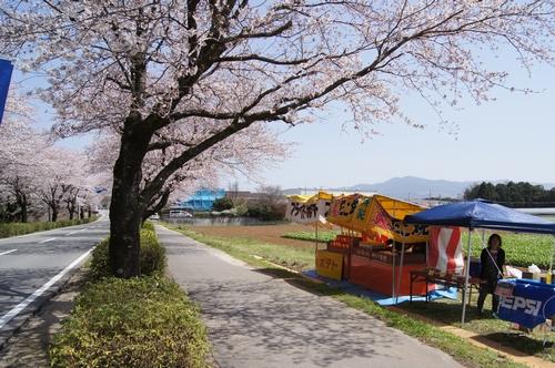 240331 おおづ桜まつり8