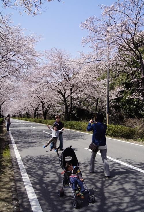 240331 おおづ桜まつり9