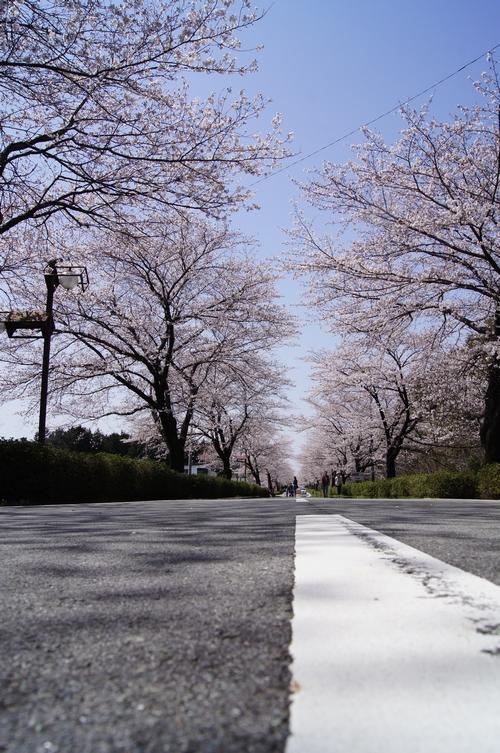 240331 おおづ桜まつり13
