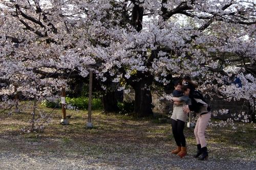 240406 神園の桜9