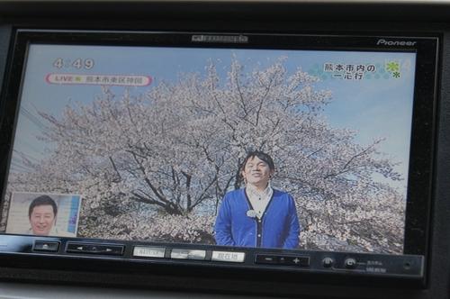 240406 神園の桜7