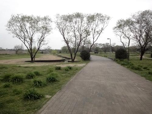 240410 下江津公園8