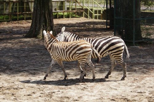 240412 動物園8