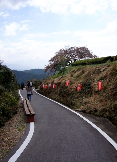 240414 遠山桜7