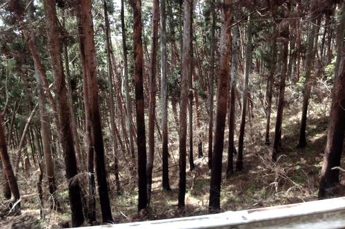 240428 亀山公園1