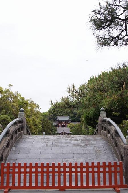 240430 鶴岡八幡宮16