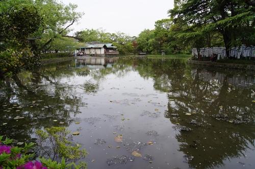 240430 鶴岡八幡宮15