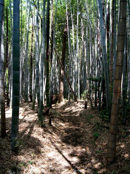 240505 竹迫日吉神社19