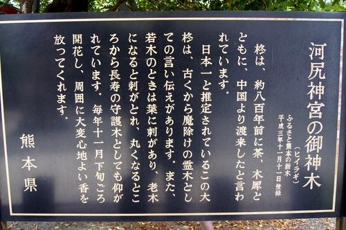 240519 河尻神社柊3