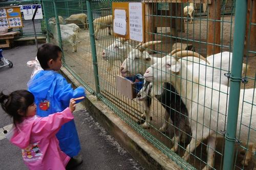 240623 大牟田市動物園12
