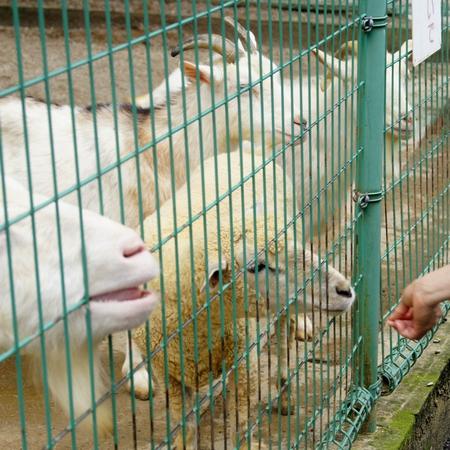 240623 大牟田市動物園11