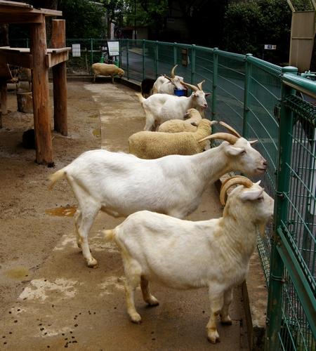 240623 大牟田市動物園9