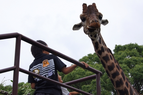 240623 大牟田市動物園34