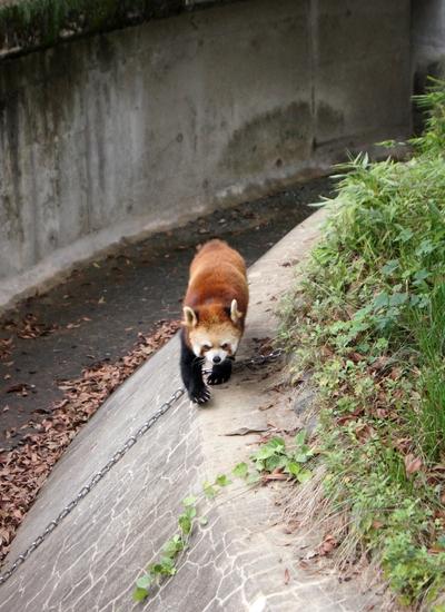 240623 大牟田市動物園43