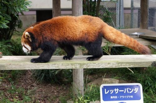 240623 大牟田市動物園42