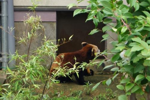 240623 大牟田市動物園40