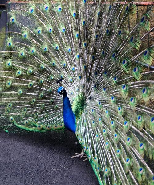 240623 大牟田市動物園50