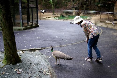 240623 大牟田市動物園48