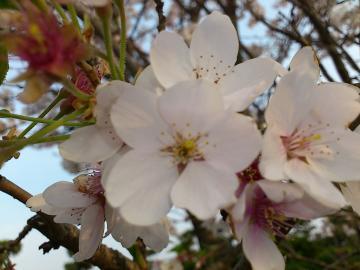 2012桜4