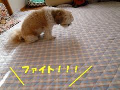 2011090201.jpg