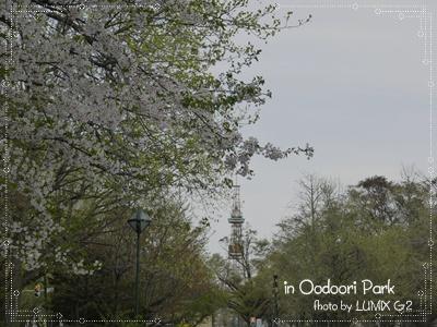 桜とTV塔