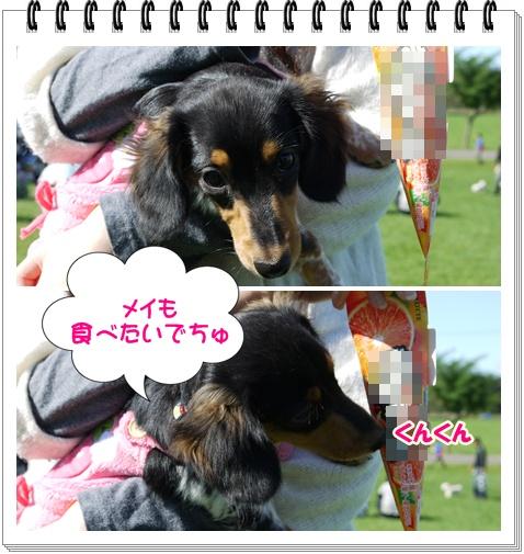 動物愛護3