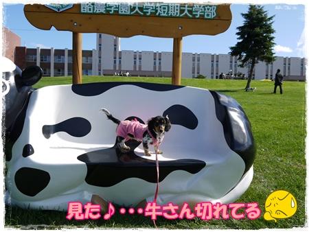 動物愛護9
