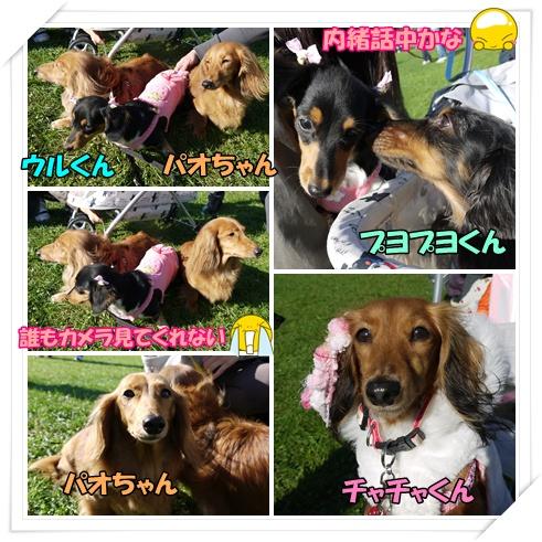 動物愛護6